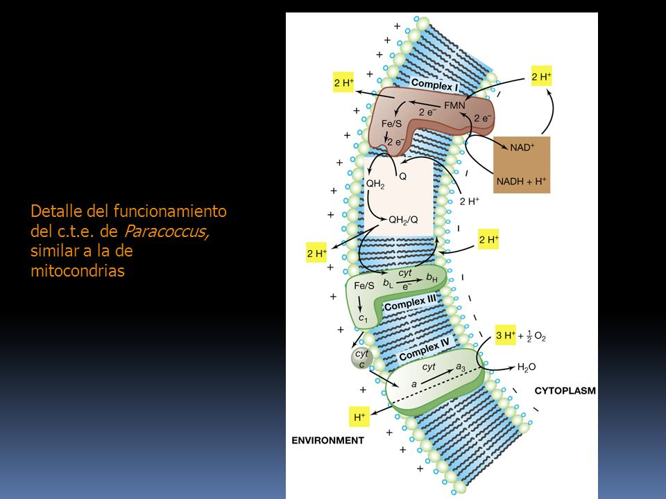 Detalle del funcionamiento del c. t. e