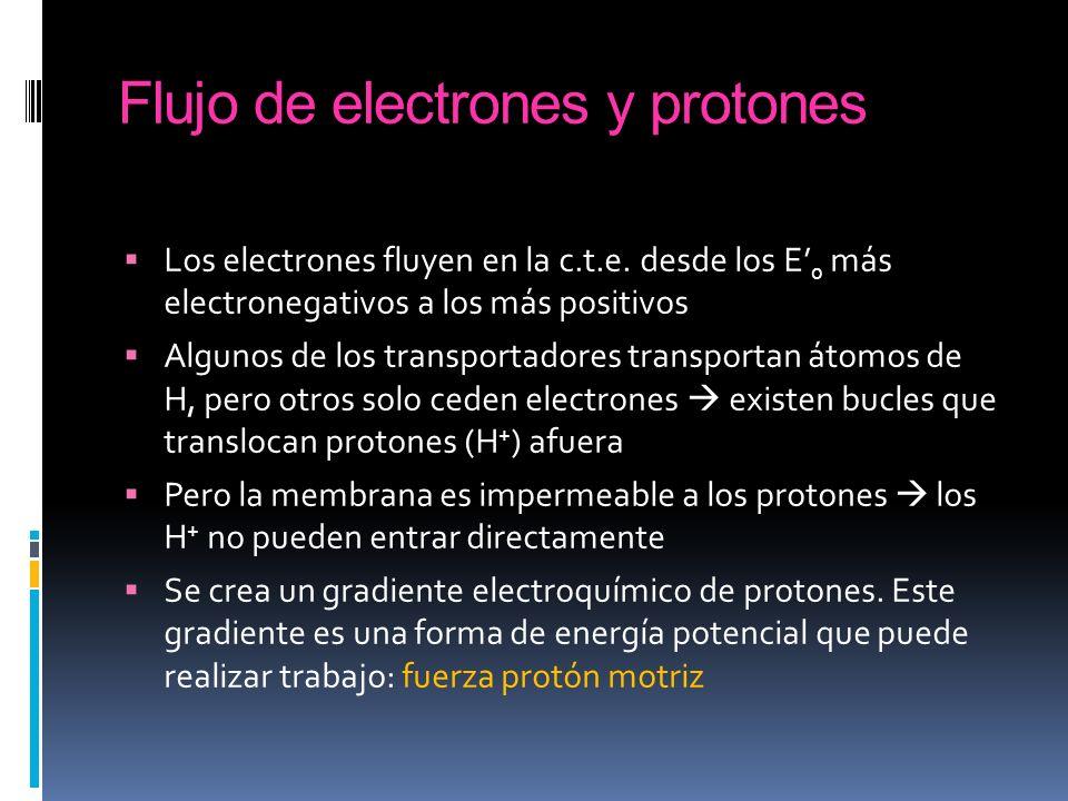 Flujo de electrones y protones