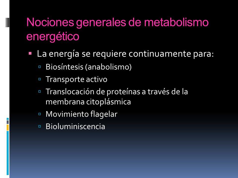 Nociones generales de metabolismo energético