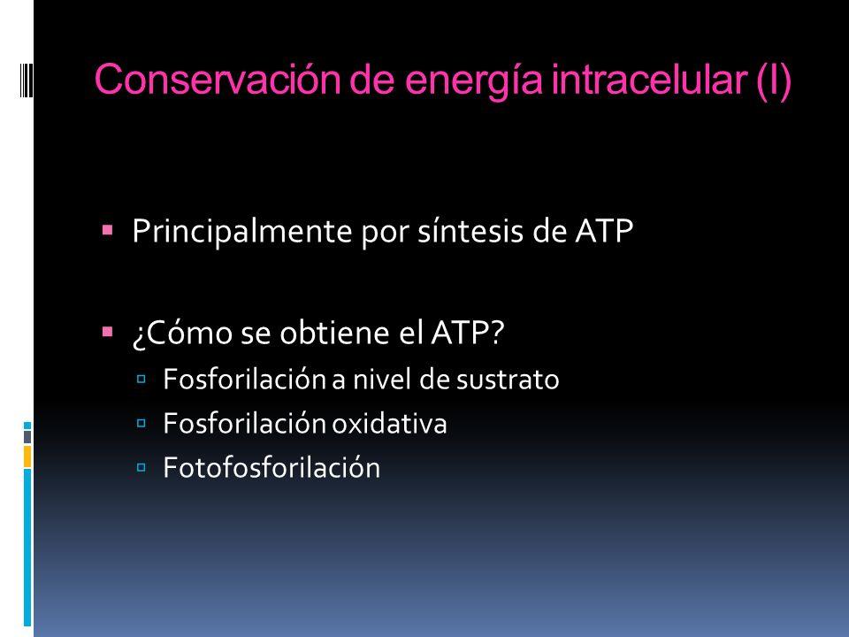 Conservación de energía intracelular (I)