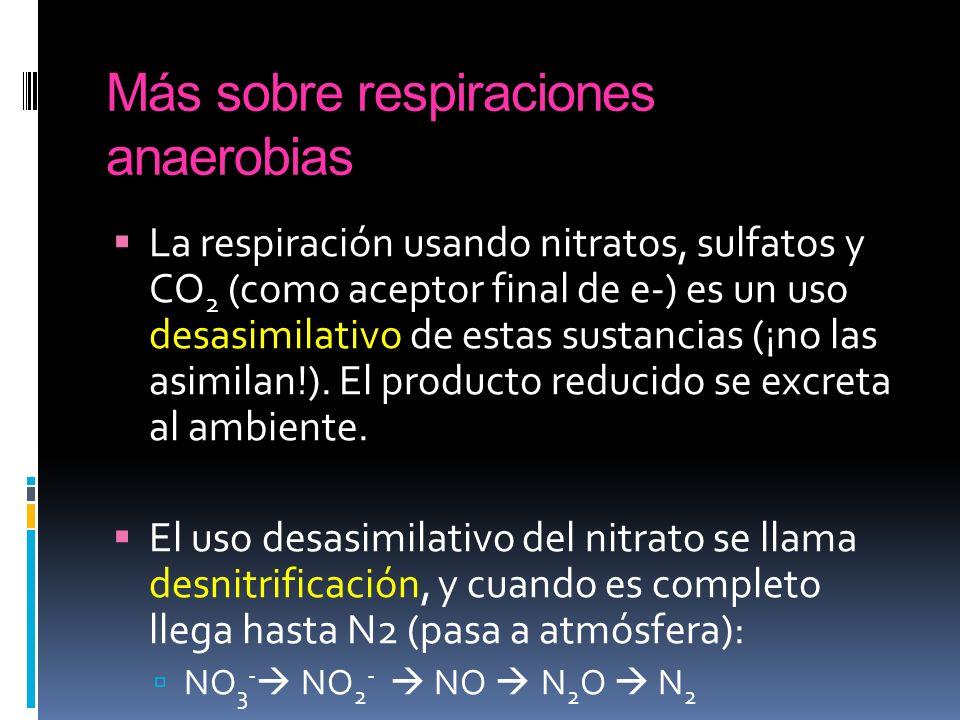 Más sobre respiraciones anaerobias