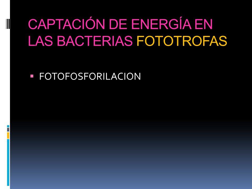 CAPTACIÓN DE ENERGÍA EN LAS BACTERIAS FOTOTROFAS