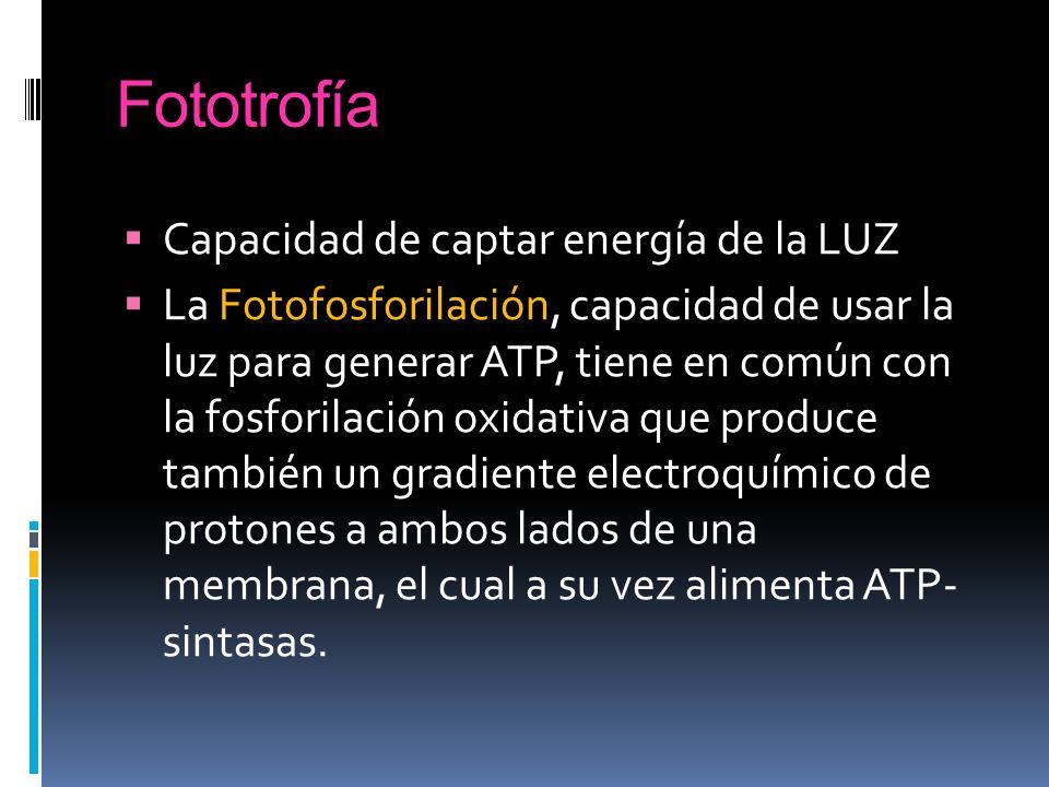 Fototrofía Capacidad de captar energía de la LUZ