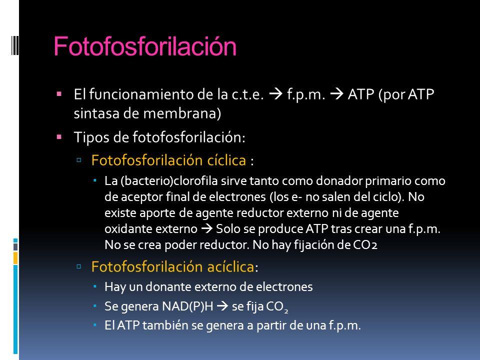 FotofosforilaciónEl funcionamiento de la c.t.e.  f.p.m.  ATP (por ATP sintasa de membrana) Tipos de fotofosforilación: