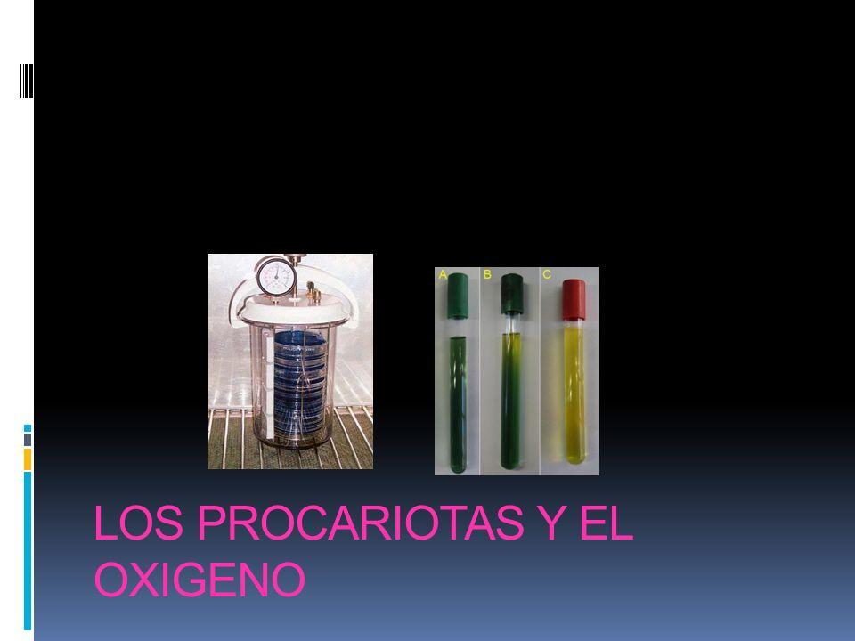 LOS PROCARIOTAS Y EL OXIGENO