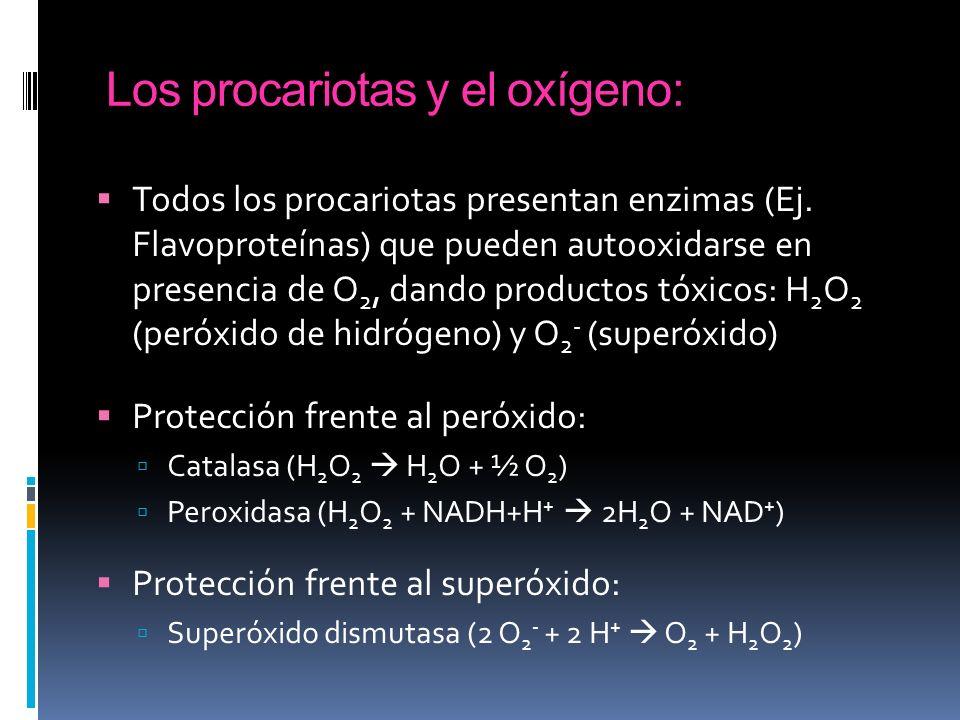 Los procariotas y el oxígeno: