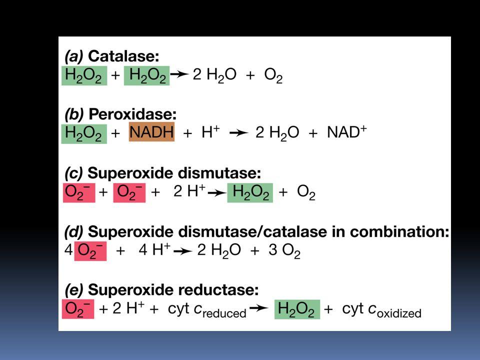 Enzimas que destruyen los radicales tóxicos de oxígeno