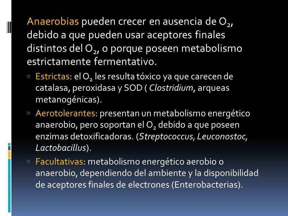 Anaerobias pueden crecer en ausencia de O2, debido a que pueden usar aceptores finales distintos del O2, o porque poseen metabolismo estrictamente fermentativo.
