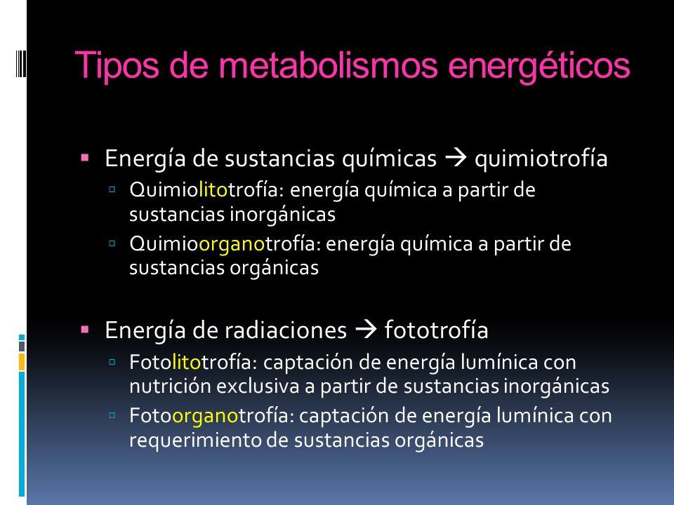 Tipos de metabolismos energéticos