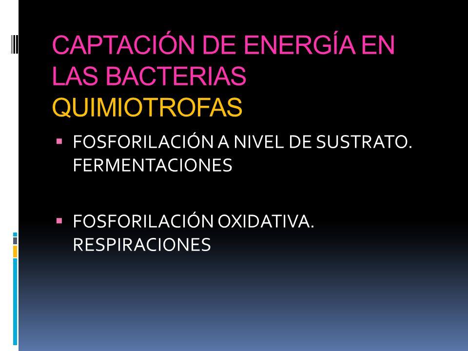 CAPTACIÓN DE ENERGÍA EN LAS BACTERIAS QUIMIOTROFAS