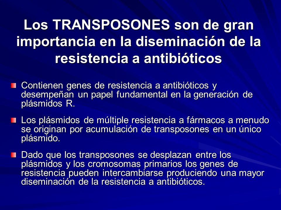 Los TRANSPOSONES son de gran importancia en la diseminación de la resistencia a antibióticos