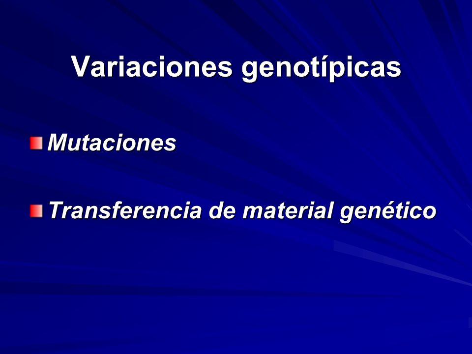 Variaciones genotípicas