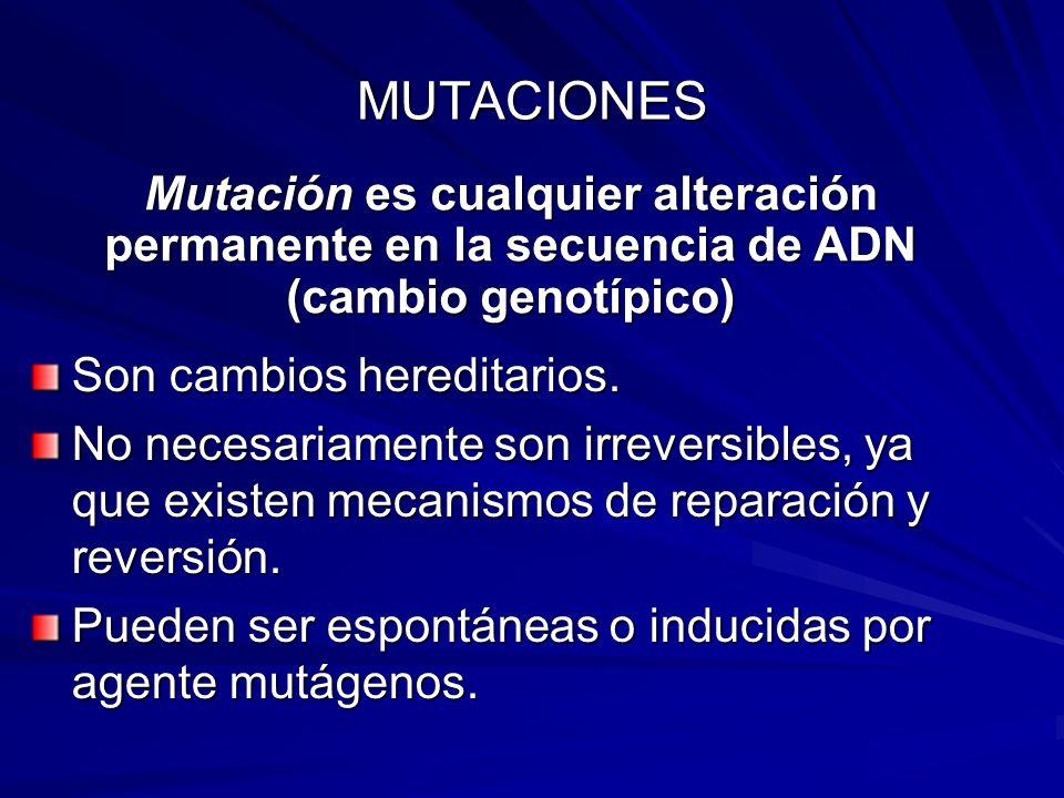MUTACIONES Mutación es cualquier alteración permanente en la secuencia de ADN (cambio genotípico) Son cambios hereditarios.