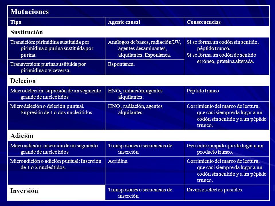 Mutaciones Sustitución Deleción Adición Inversión Tipo Agente causal