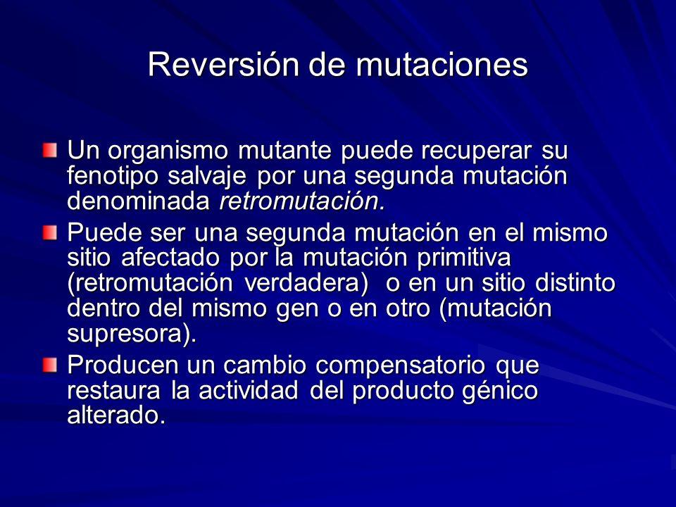 Reversión de mutaciones