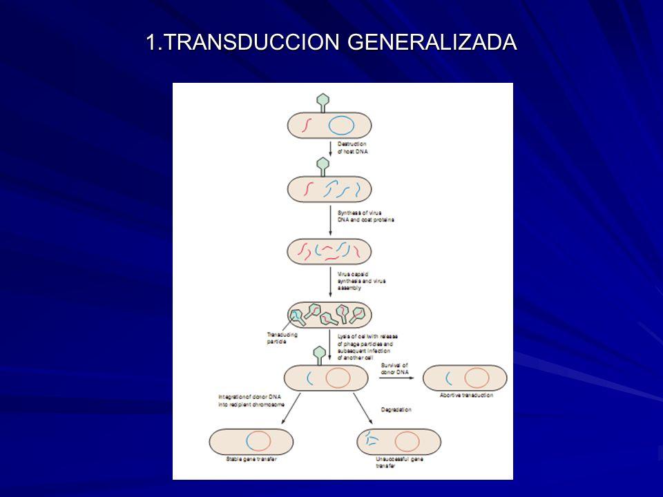 1.TRANSDUCCION GENERALIZADA