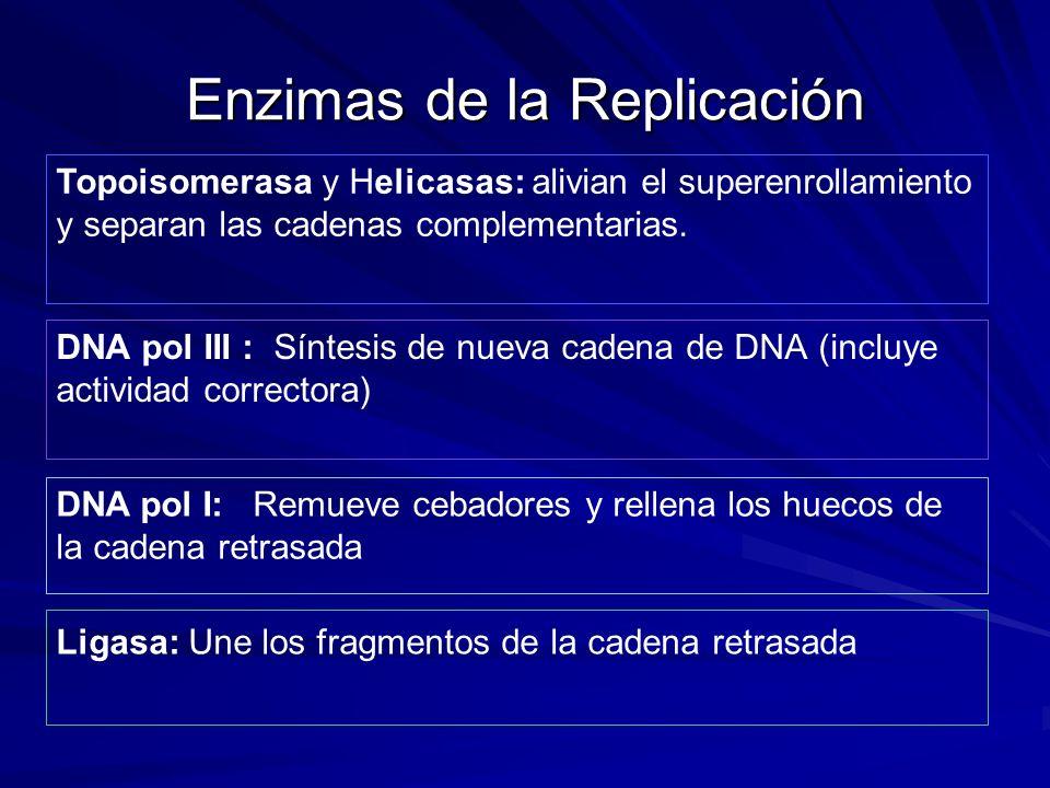 Enzimas de la Replicación