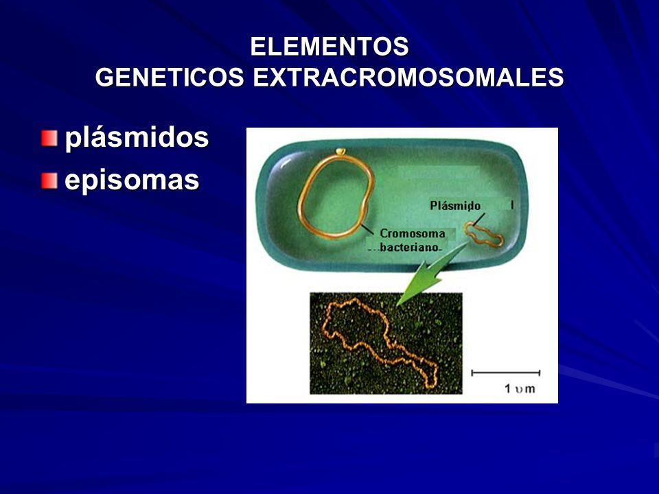 ELEMENTOS GENETICOS EXTRACROMOSOMALES