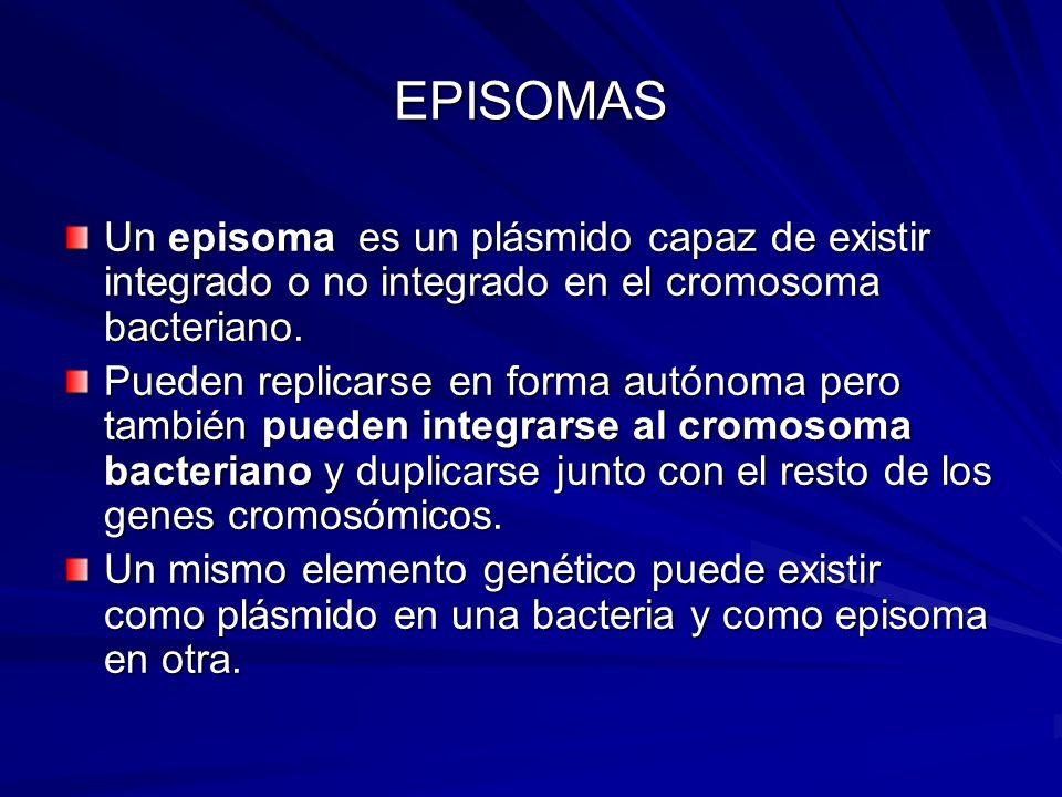 EPISOMAS Un episoma es un plásmido capaz de existir integrado o no integrado en el cromosoma bacteriano.