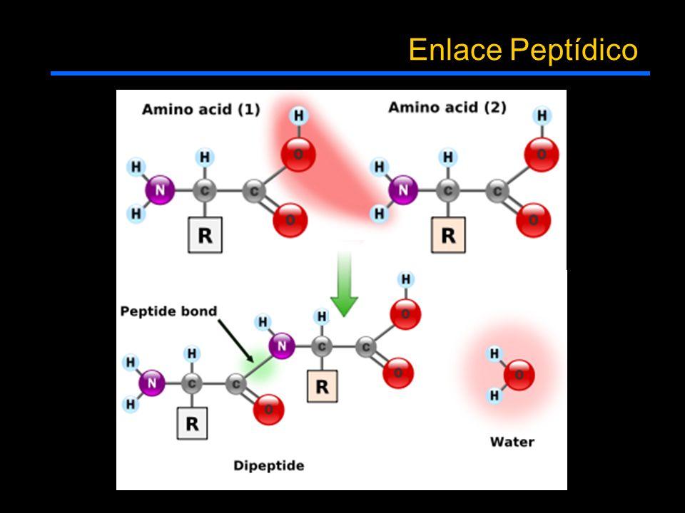 Enlace Peptídico