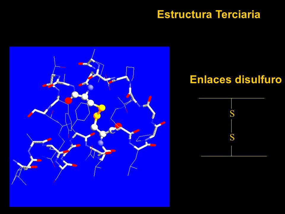 Estructura Terciaria Enlaces disulfuro S