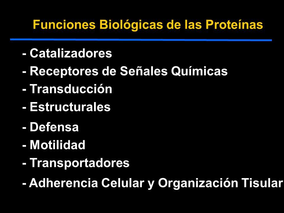 Funciones Biológicas de las Proteínas