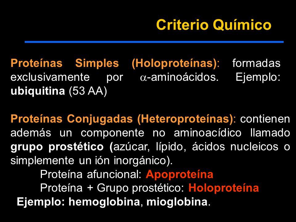 Criterio Químico Proteínas Simples (Holoproteínas): formadas exclusivamente por -aminoácidos. Ejemplo: ubiquitina (53 AA)