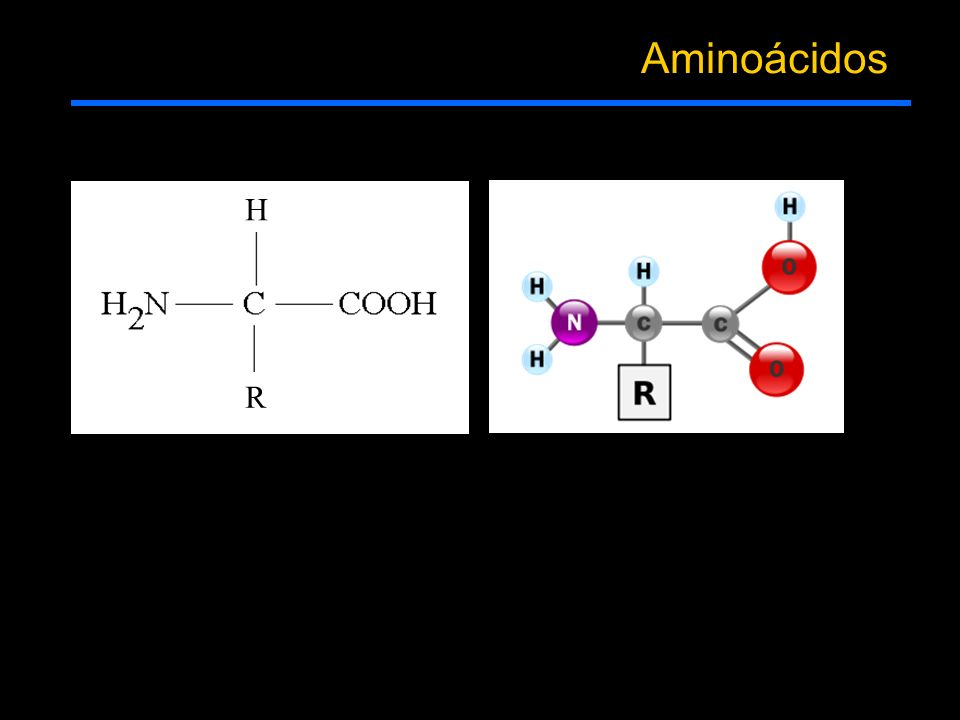 Aminoácidos R H