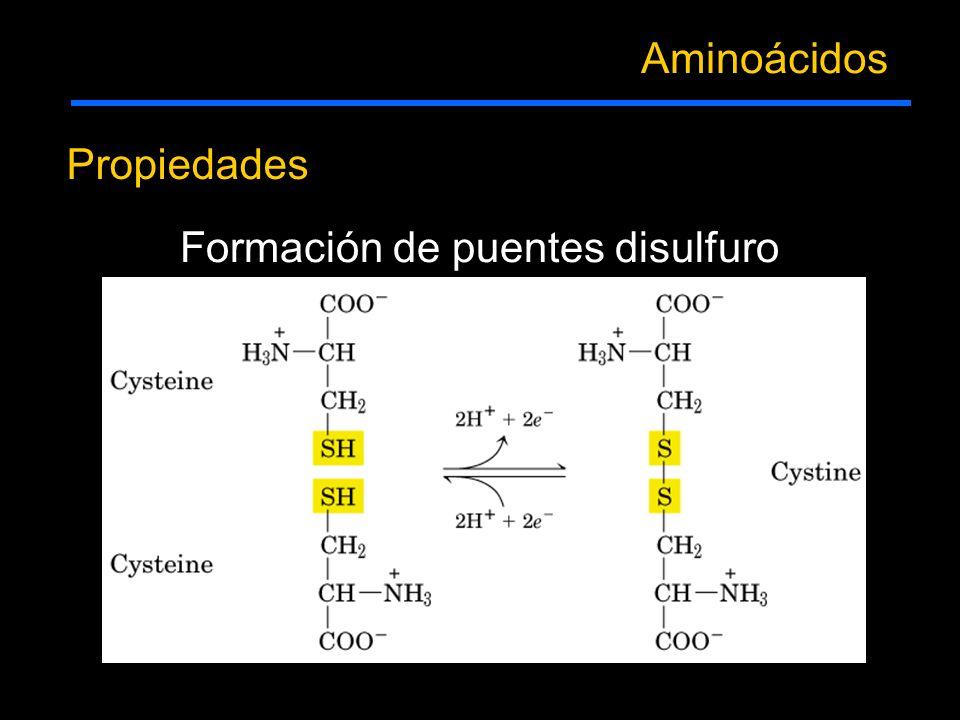 Aminoácidos Propiedades Formación de puentes disulfuro