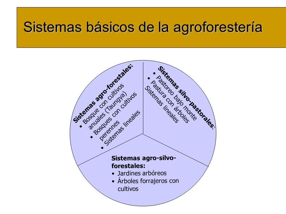Sistemas básicos de la agroforestería