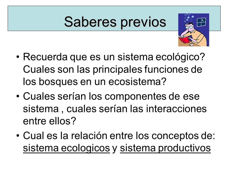 Saberes previos Recuerda que es un sistema ecológico Cuales son las principales funciones de los bosques en un ecosistema