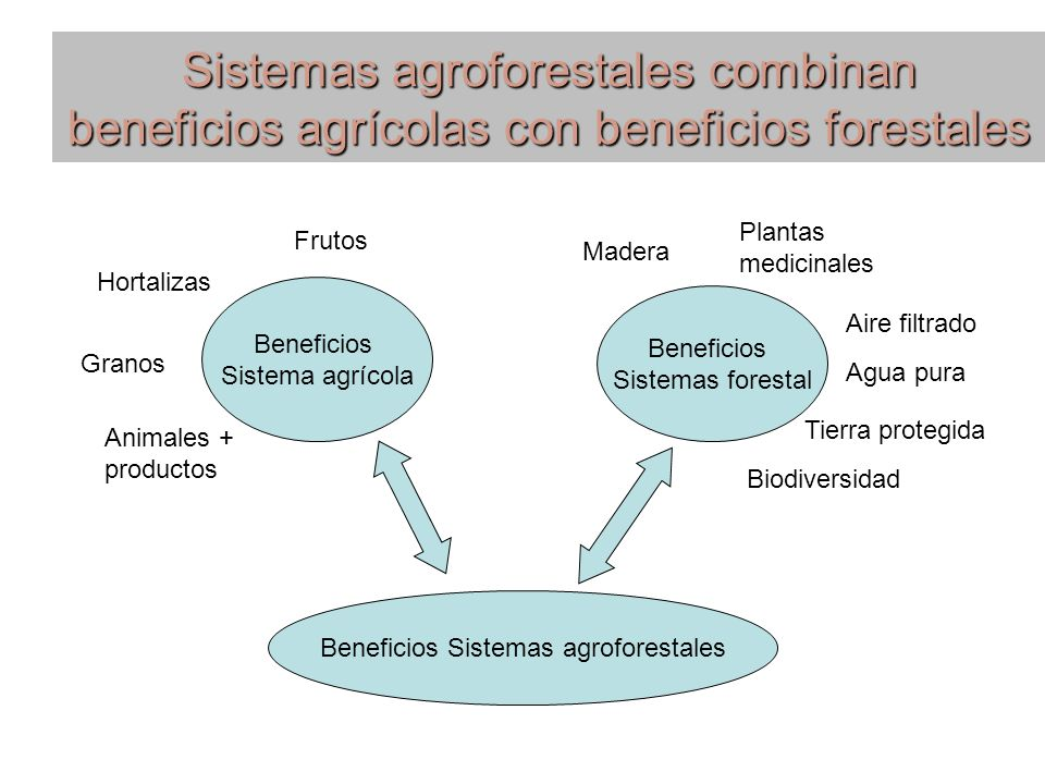 Beneficios Sistemas agroforestales