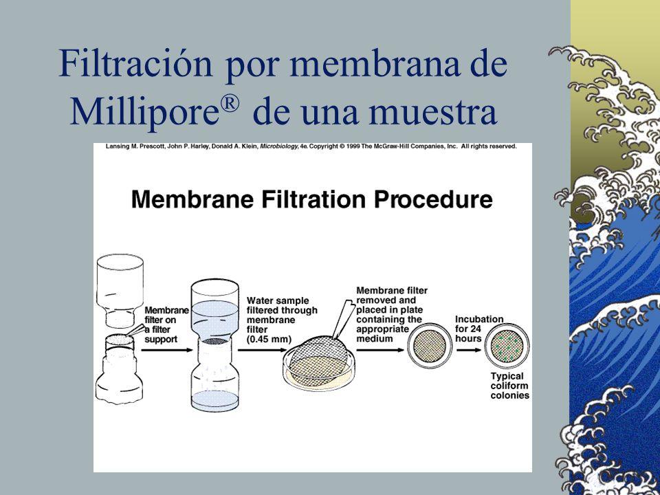 Filtración por membrana de Millipore® de una muestra