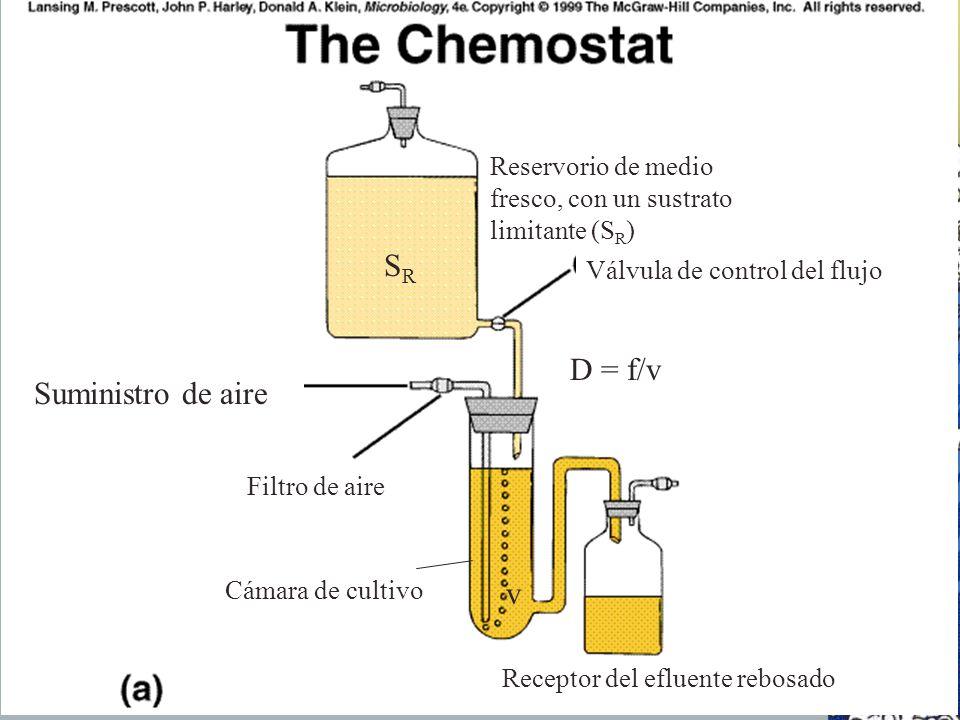 Receptor del efluente rebosado