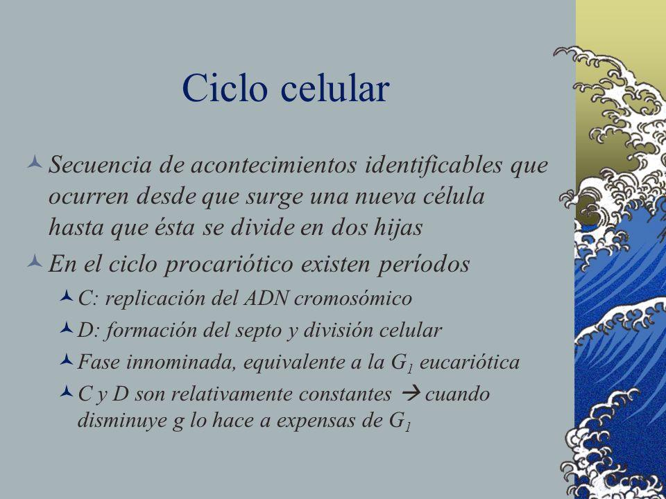 Ciclo celular Secuencia de acontecimientos identificables que ocurren desde que surge una nueva célula hasta que ésta se divide en dos hijas.
