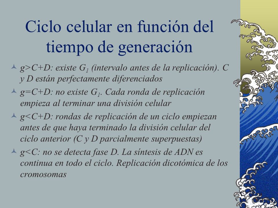 Ciclo celular en función del tiempo de generación