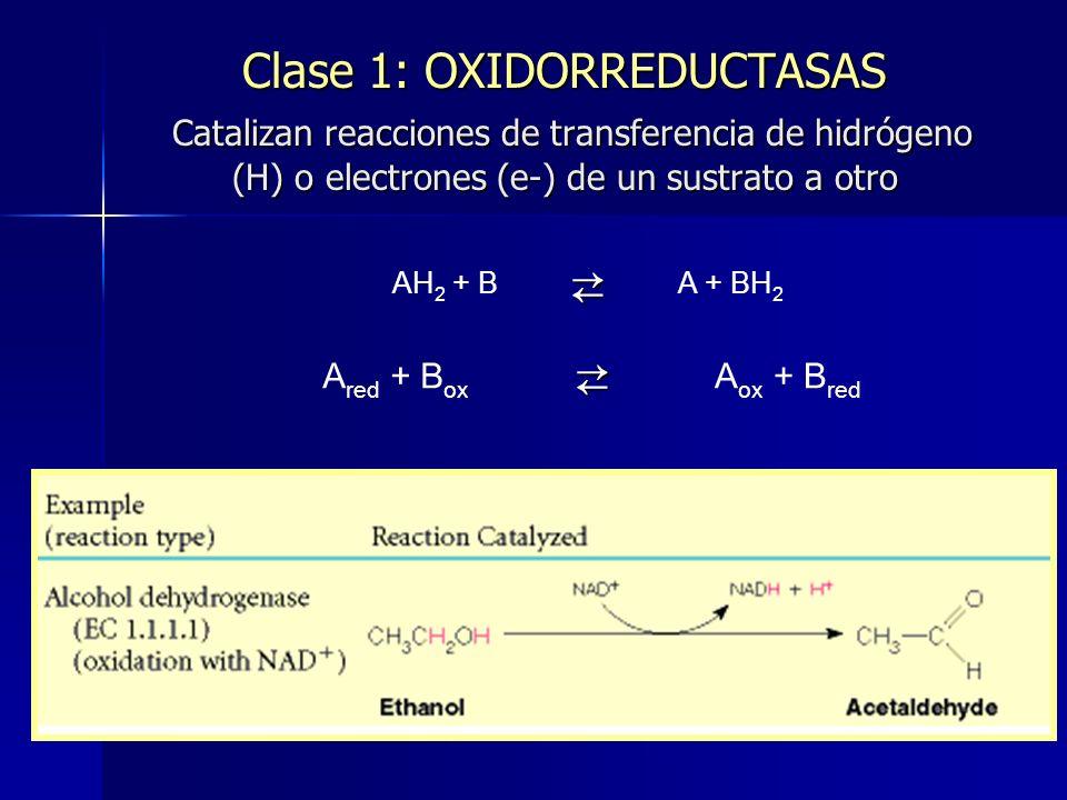 Clase 1: OXIDORREDUCTASAS Catalizan reacciones de transferencia de hidrógeno (H) o electrones (e-) de un sustrato a otro
