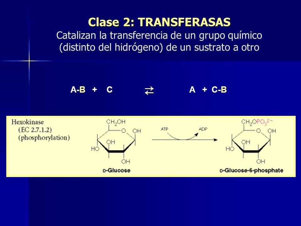 Clase 2: TRANSFERASAS Catalizan la transferencia de un grupo químico (distinto del hidrógeno) de un sustrato a otro