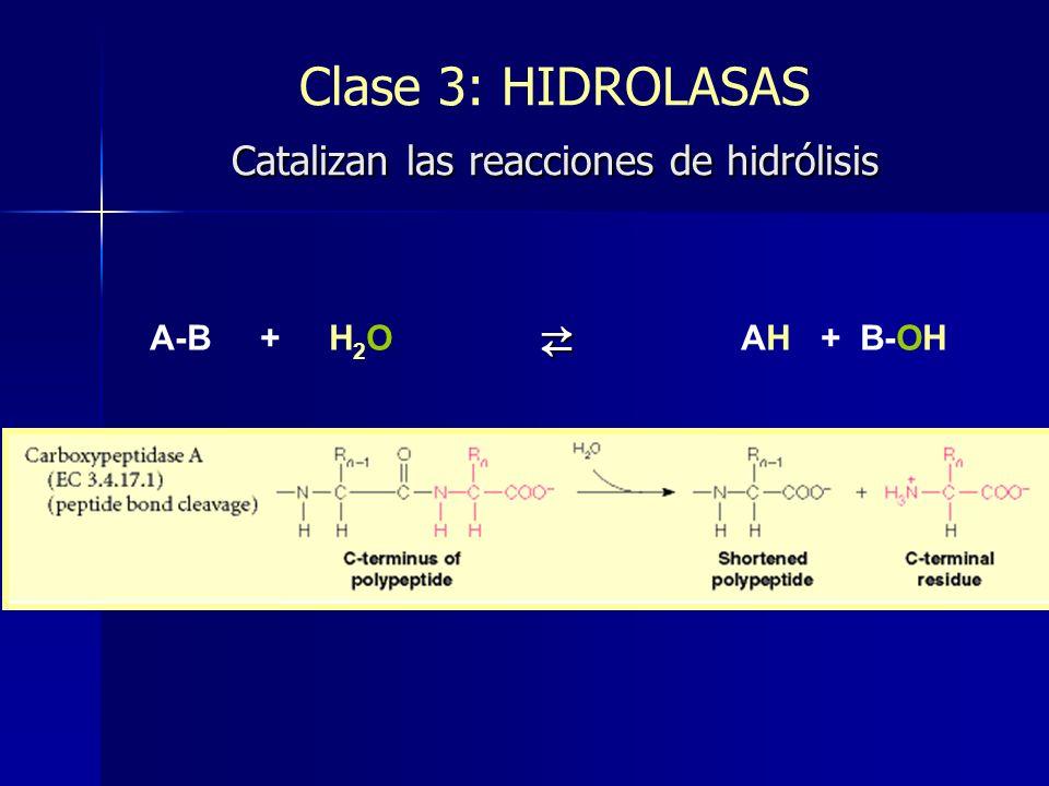Clase 3: HIDROLASAS Catalizan las reacciones de hidrólisis