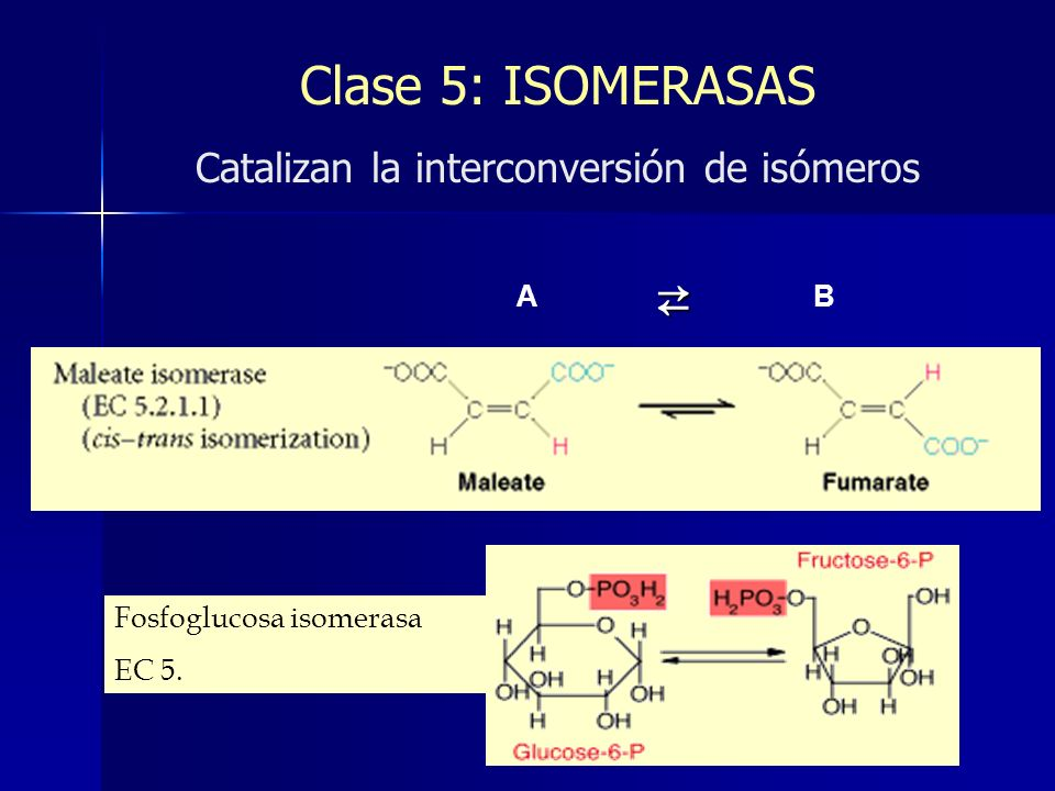 Clase 5: ISOMERASAS Catalizan la interconversión de isómeros