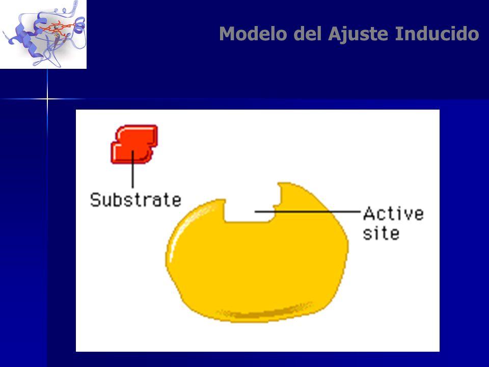 Modelo del Ajuste Inducido
