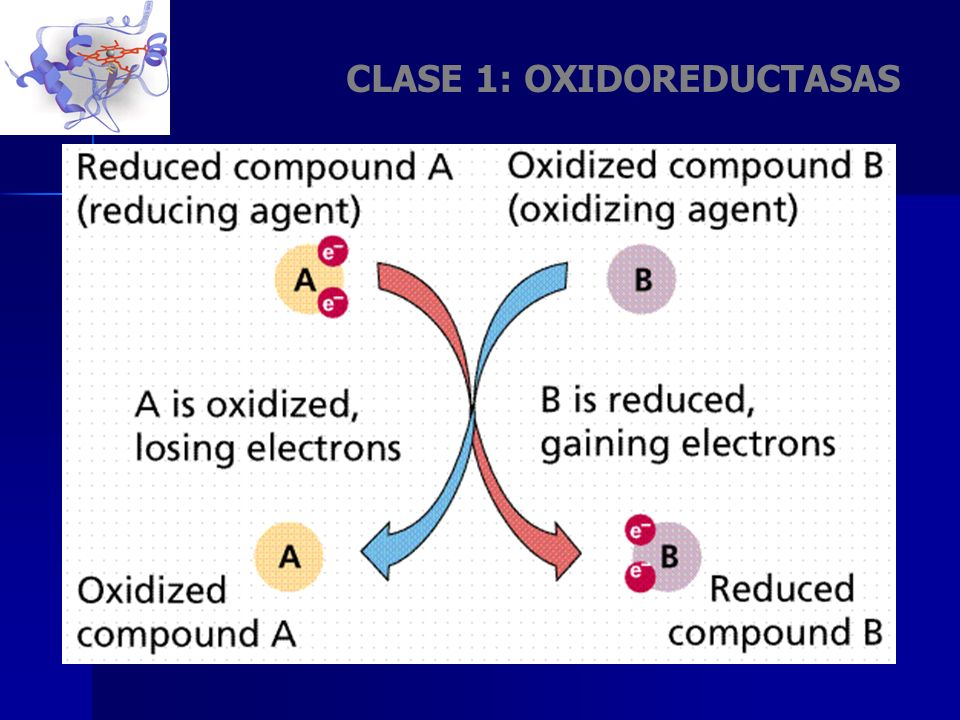 CLASE 1: OXIDOREDUCTASAS