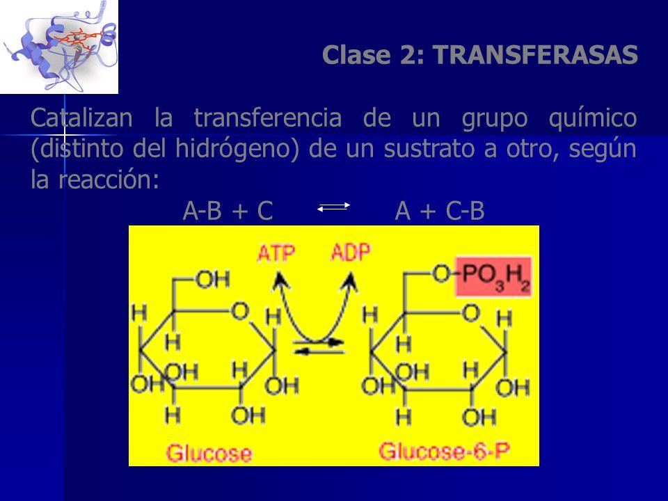 Clase 2: TRANSFERASAS Catalizan la transferencia de un grupo químico (distinto del hidrógeno) de un sustrato a otro, según la reacción: