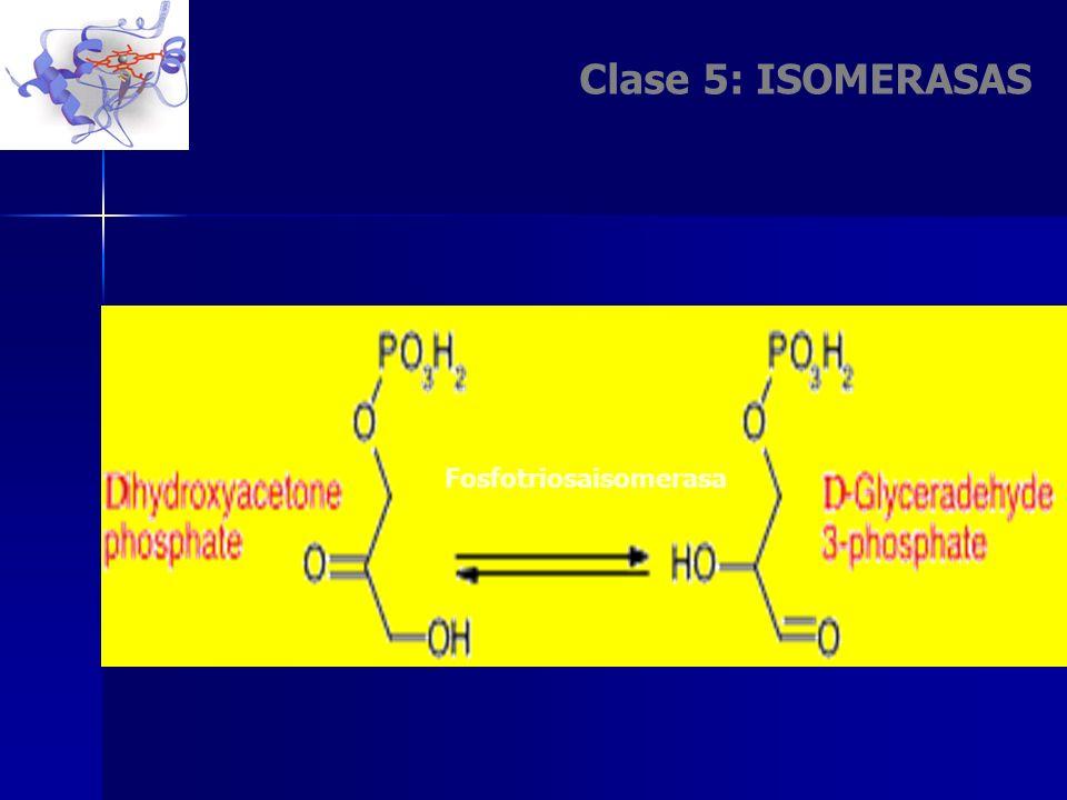 Clase 5: ISOMERASAS Fosfotriosaisomerasa