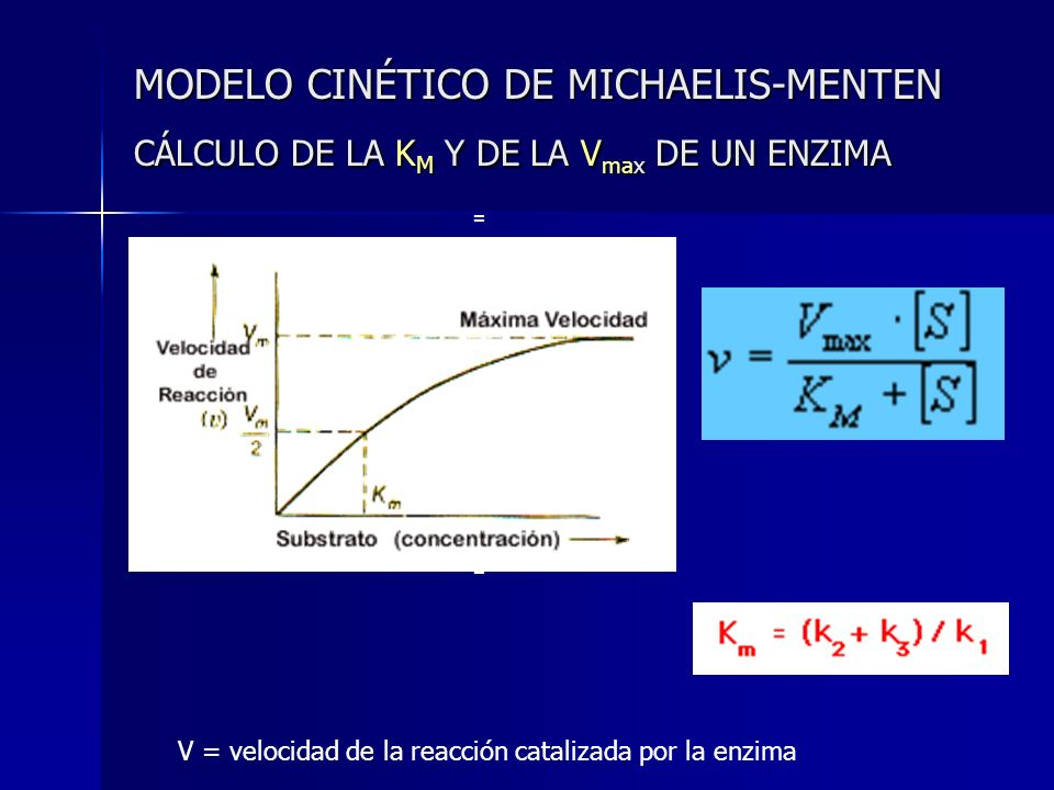 MODELO CINÉTICO DE MICHAELIS-MENTEN CÁLCULO DE LA KM Y DE LA Vmax DE UN ENZIMA