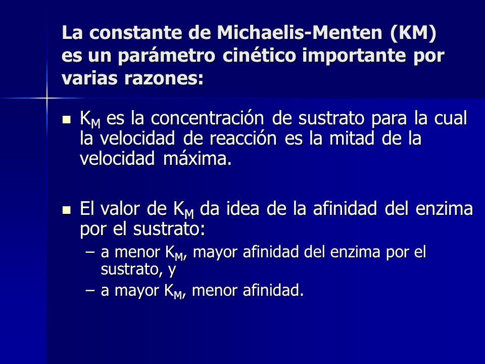 El valor de KM da idea de la afinidad del enzima por el sustrato:
