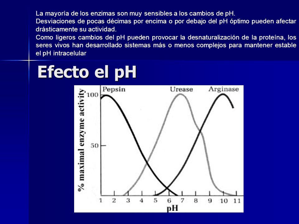 La mayoría de los enzimas son muy sensibles a los cambios de pH.