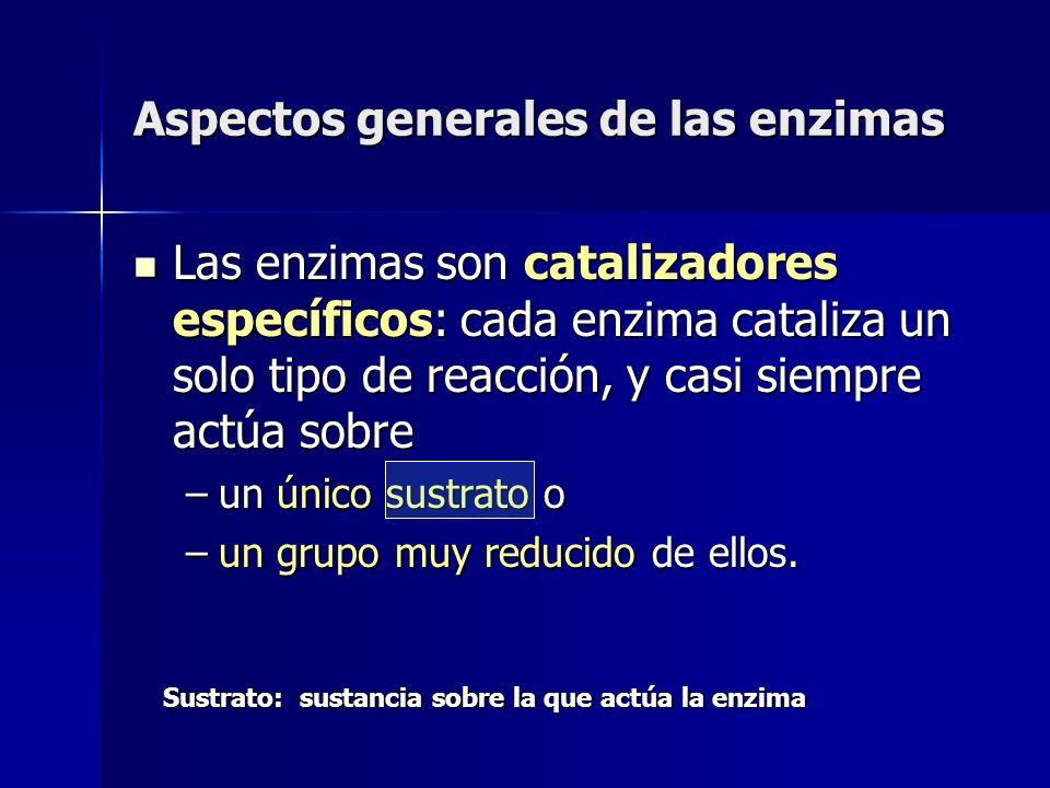 Aspectos generales de las enzimas