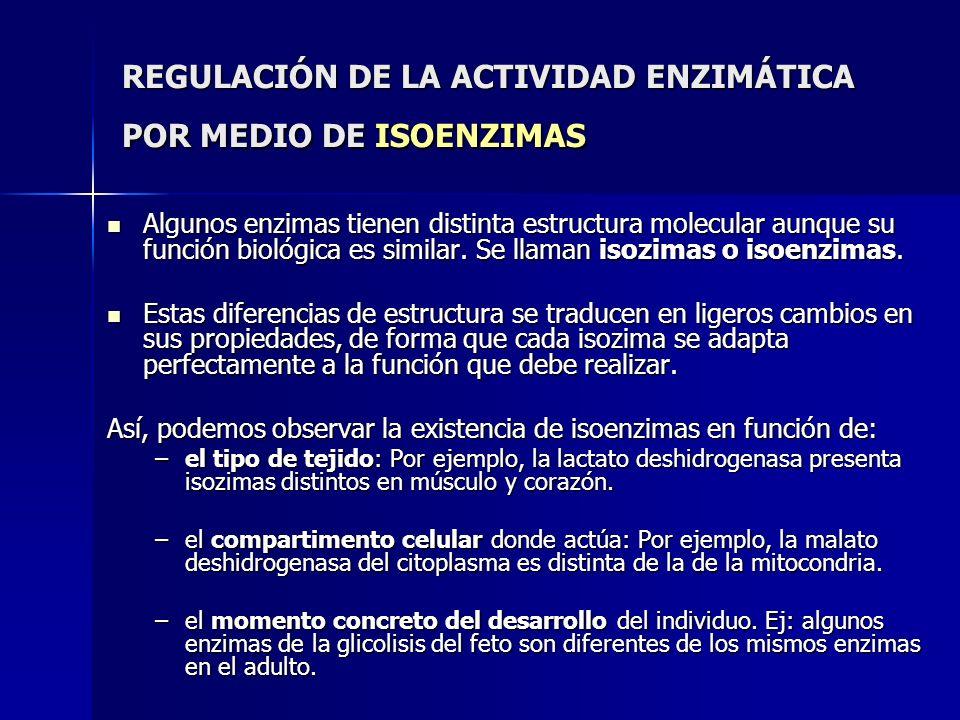 REGULACIÓN DE LA ACTIVIDAD ENZIMÁTICA POR MEDIO DE ISOENZIMAS