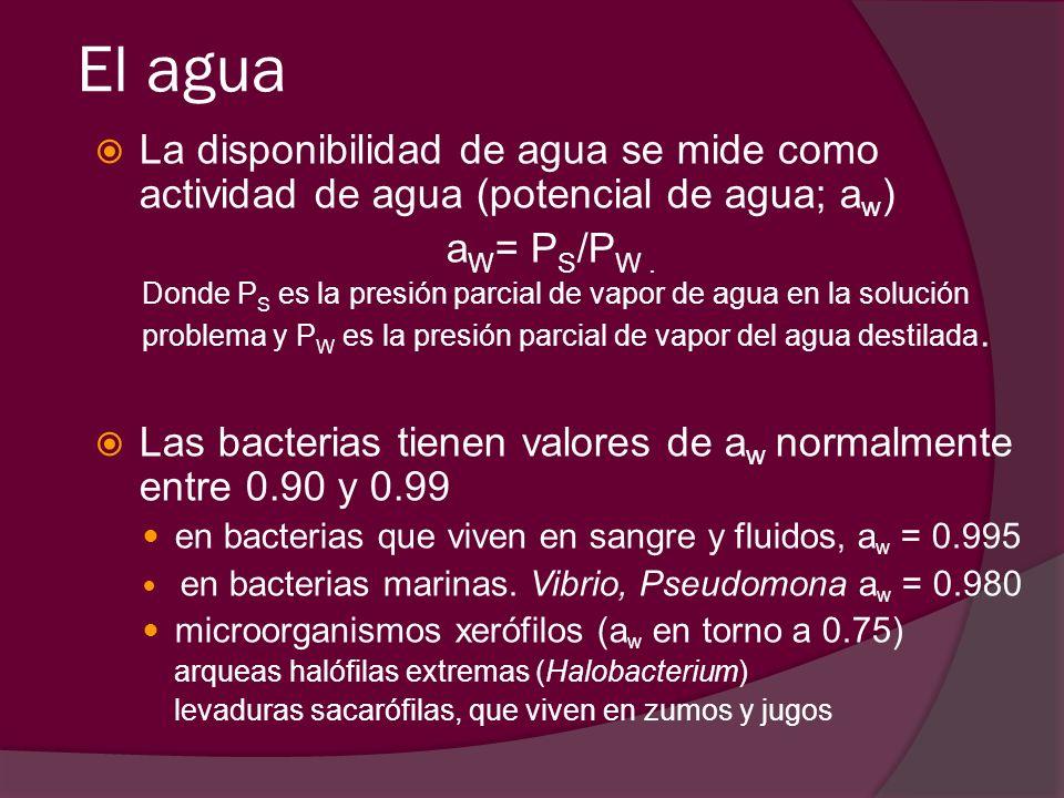 El agua La disponibilidad de agua se mide como actividad de agua (potencial de agua; aw) aW= PS/PW .